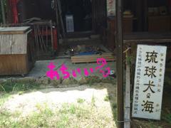 琉球犬.JPG