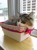 箱入り猫.jpg