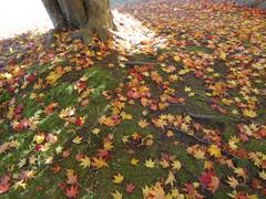 紅葉絨毯.JPG