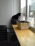 黄昏黒猫.jpg