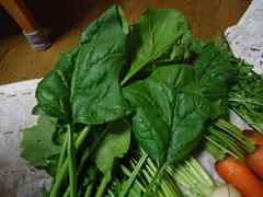玉野菜2.JPG